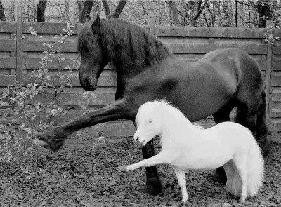 Продолжительность жизни лошади: какие факторы влияют на долголетие?