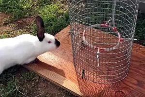 Популярные заблуждения о кроликах: они не любят морковь и опасны для кошек