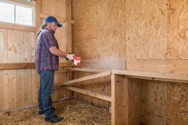 Кормление кур травой – про полезные и ядовитые растения