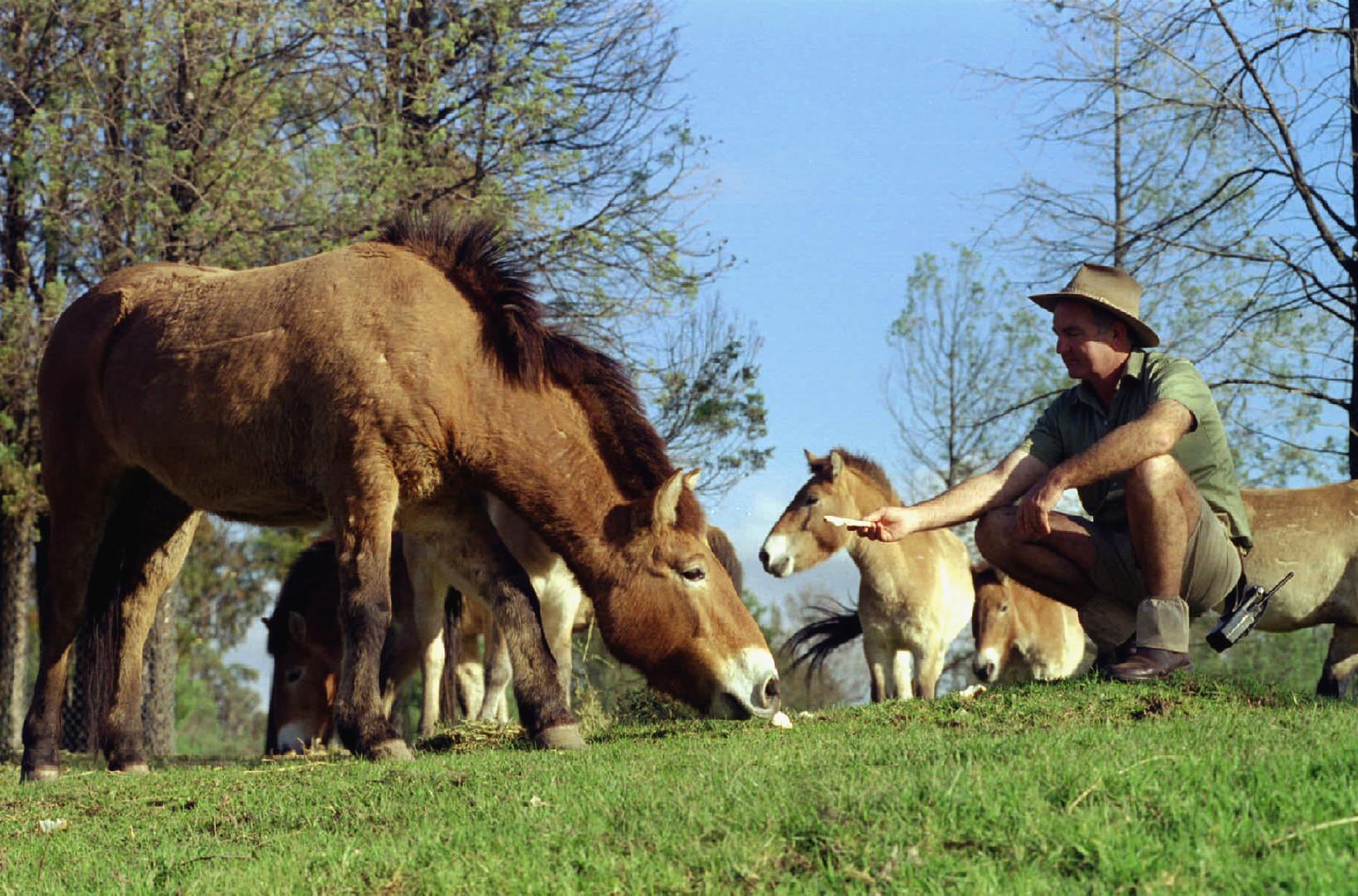 Гайд: приручение лошадей в black desert