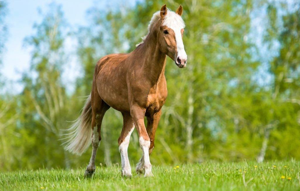 Какая продолжительность жизни у лошадей? сколько живут лошади и как определить их возраст.