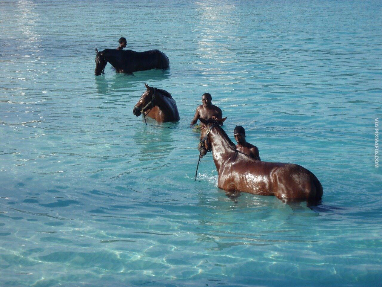 Умеют ли лошади плавать?