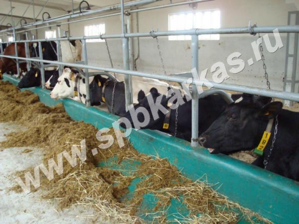 Разновидности кормораздатчиков для крс и правила их использования на фермах