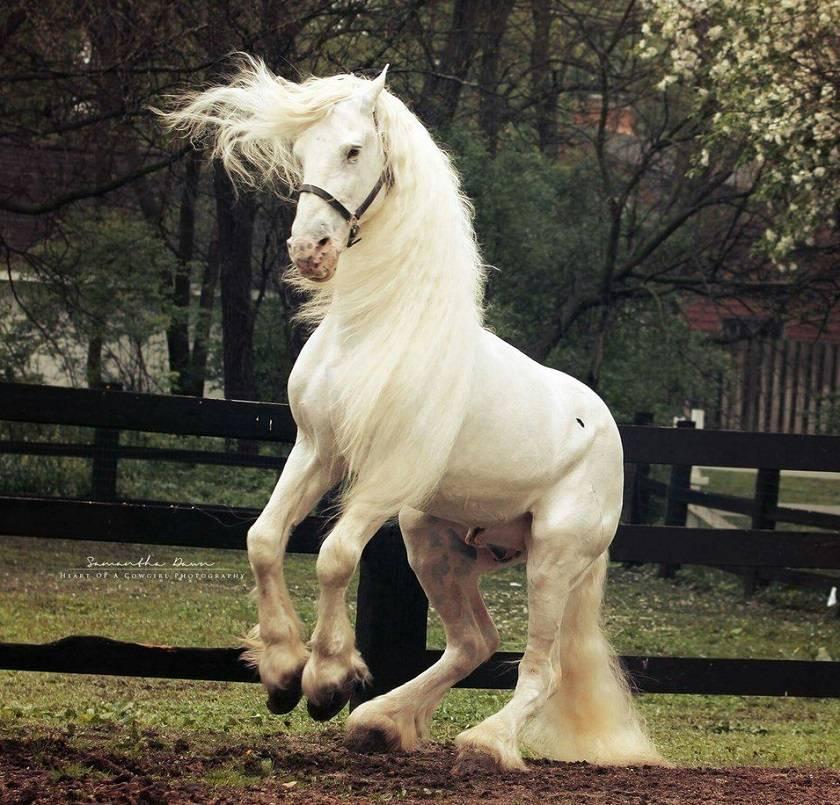 Самые красивые лошади в мире: породы, фото, видео