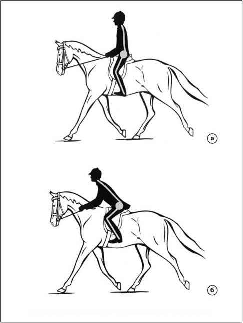 Как ездить верхом на лошади правильно: обучение, основные правила, видео || чем бьют лошадей при езде
