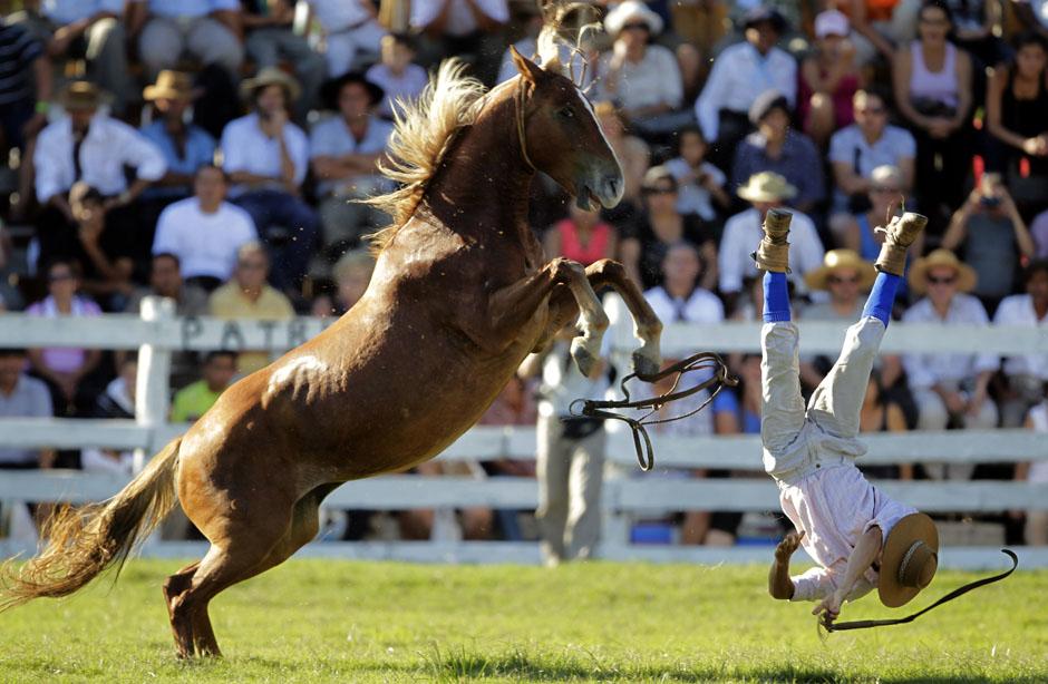 Укус лошади: почему кусается, чем опасен, как отучить, отзывы