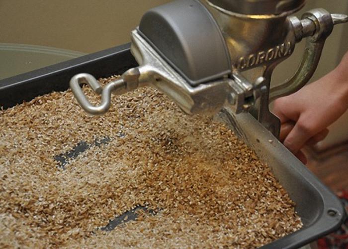 Как прорастить пшеницу, ячмень или овес для кур?