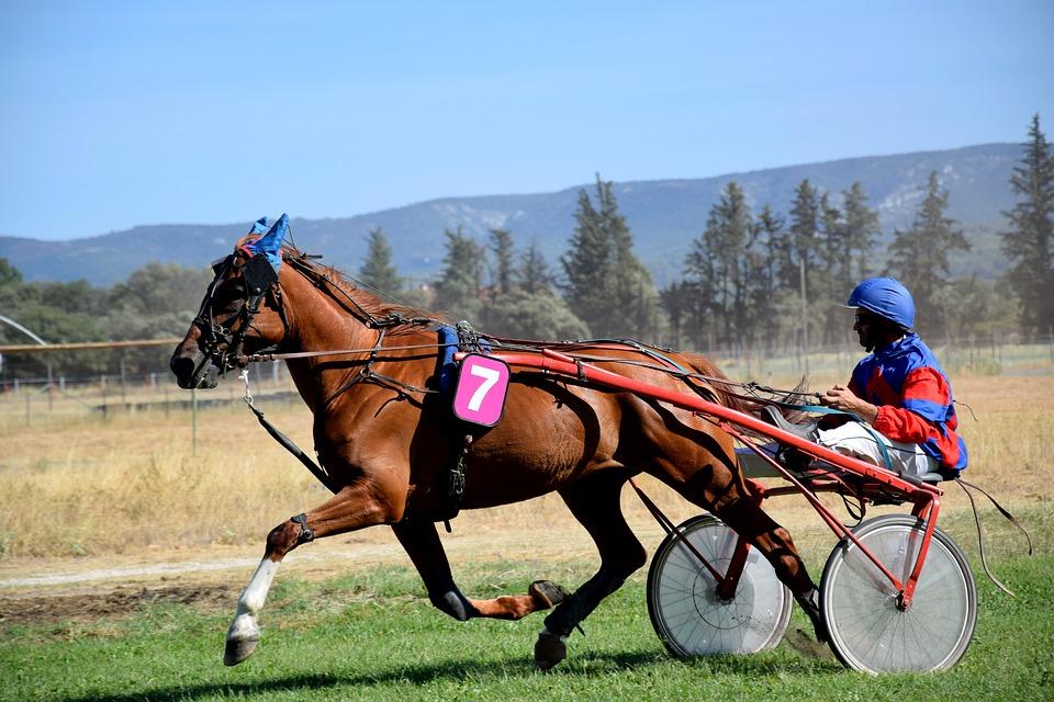 Все про конный спорт и его разновидности: скачки на лошадях, выездку и конкур