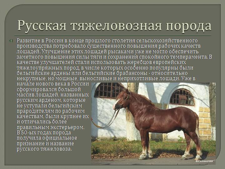 ᐉ рысистые породы лошадей: характеристика, описание - zooon.ru