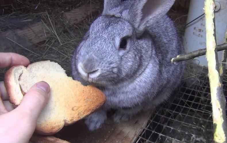 Чем никогда нельзя кормить кроликов: запрещенные и опасные продукты