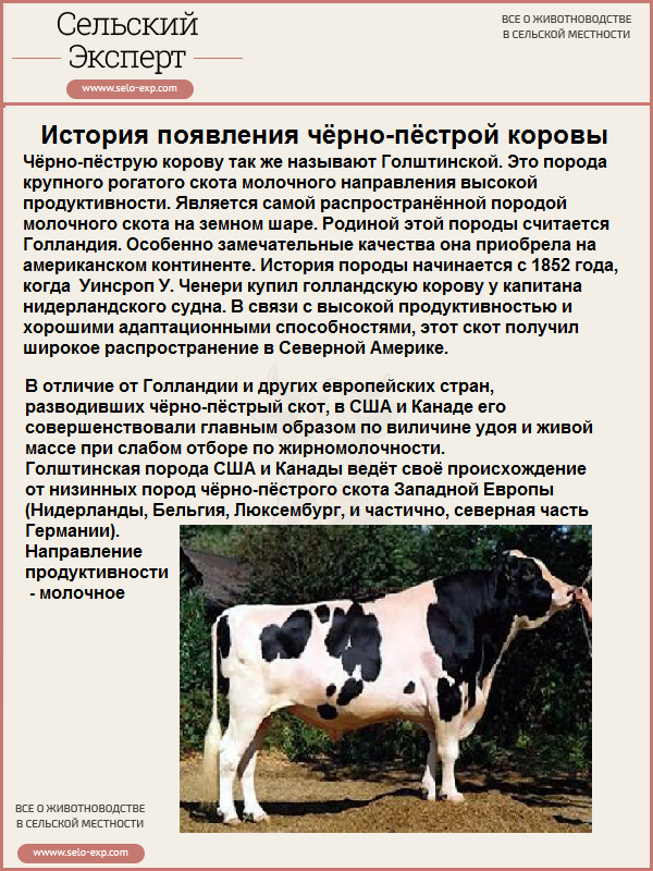 Сравнительная таблица по породам крс — скотоводство. крупный рогатый скот