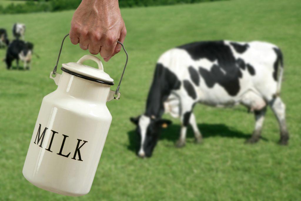 У коровы пропало молоко: причины