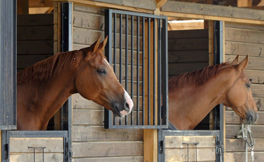 Сколько стоит содержание лошади в деревне