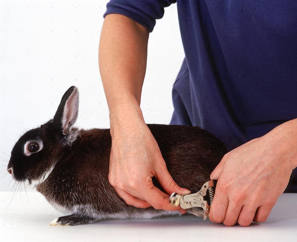 Как ухаживать за кроликами в домашних условиях