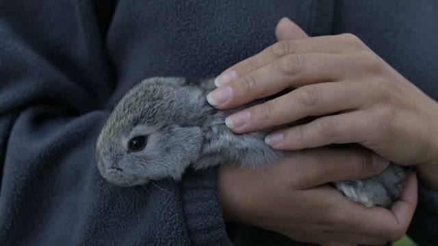 Поведение кроликов: что нужно знать владельцу
