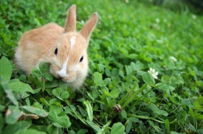 Можно ли кроликам давать молочай: узнаем все секреты