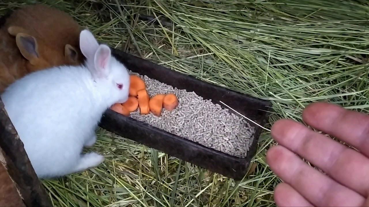 Чем можно кормить маленьких кроликов