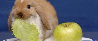 «можно ли кроликам арбузные корки»
