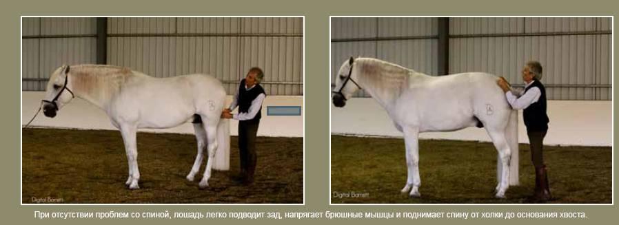 ⓘ энциклопедия - абсент, конь - вики  вы знали?