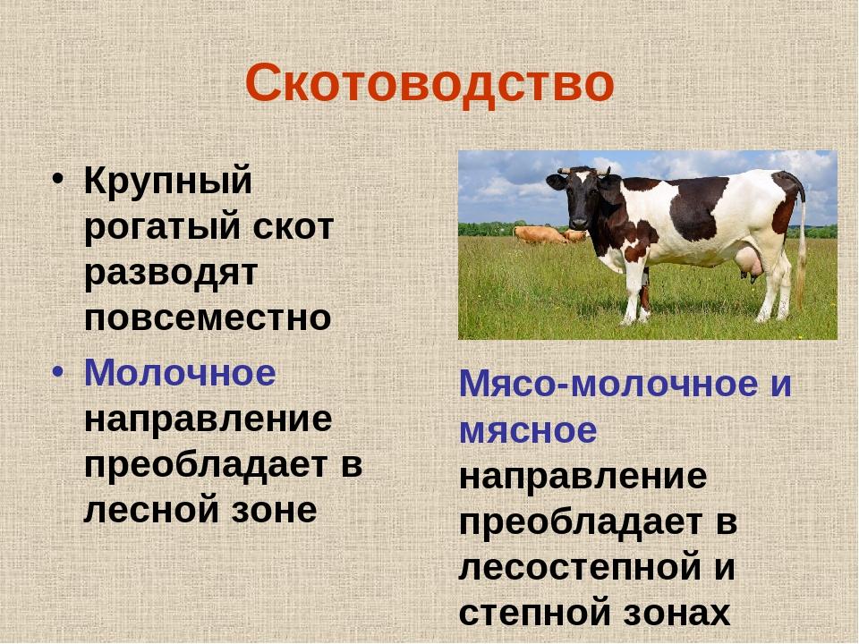 Породы крупного рогатого скота комбинированного направления продуктивности и их характеристика
