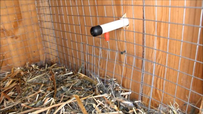 Содержание кроликов зимой в клетках на улице: какую температуру выдерживают, что едят, как поить