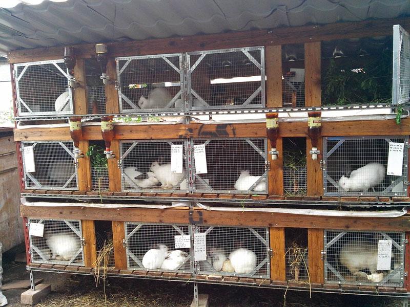 Советы по разведению кроликов в домашних условиях для начинающих. какая должна быть клетка? - твой питомец