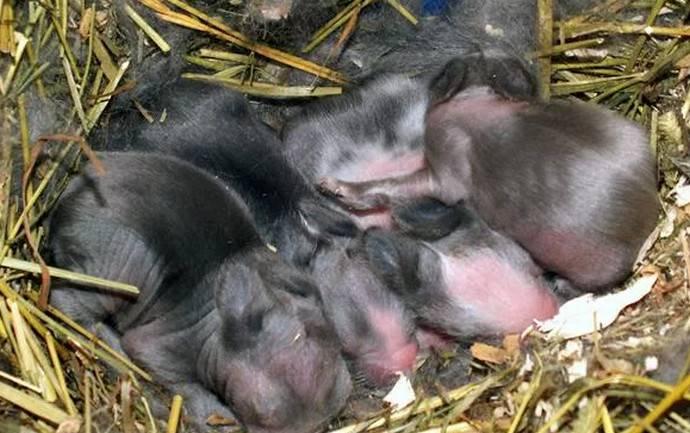✅ через сколько дней кролики открывают глаза - питомник46.рф