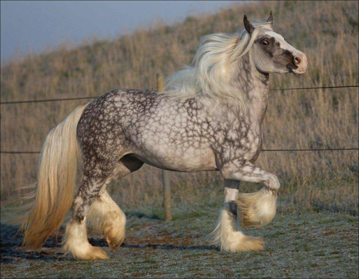Самые красивые кони в мире, фото, история происхождения