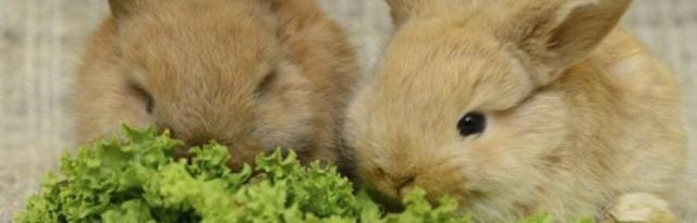 Каким зерном можно кормить кроликов: какие зерносмеси лучше давать