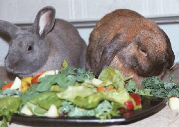 Что делать, если кролик не ест и не пьет и как избежать самых частых проблем