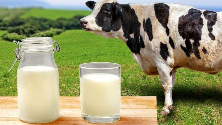 Корова задерживает молоко: причины задержки у крс