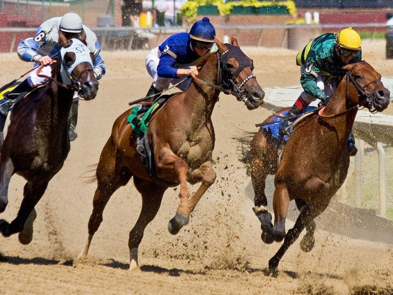 Скачки на лошадях: правила и места проведения, конный спорт и участие в нем, классификация лошадей и наездников (105 фото + видео)