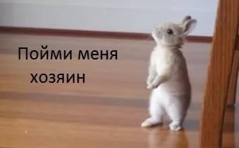 Зачем кролики стучат задними лапами ⋆ онлайн-журнал для женщин