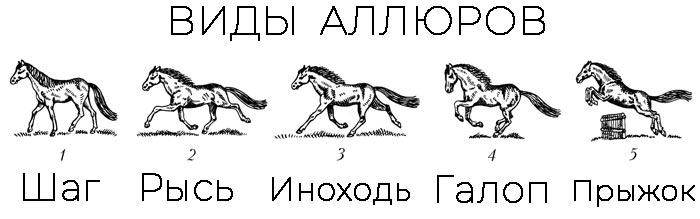 Аллюры лошадей. виды и их характеристика: шаг, рысь, галоп и иноходь
