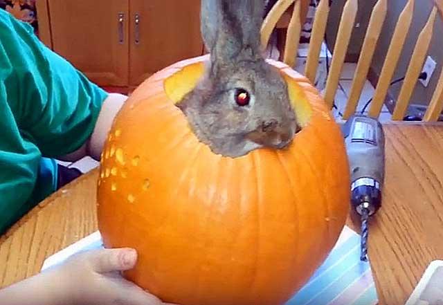 Можно ли кроликам давать кабачки — польза или вред?