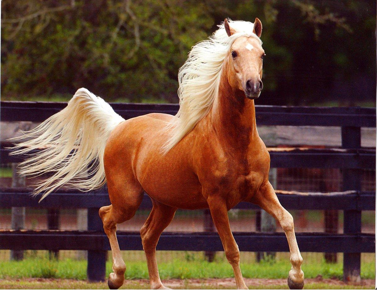 Топ 10 самых больших лошадей в мире