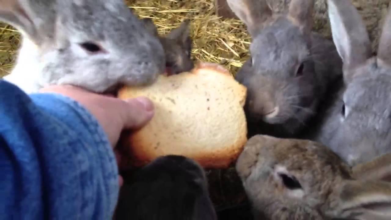 Чем кормить декоративного кролика — список что не едят и что можно давать питомцам