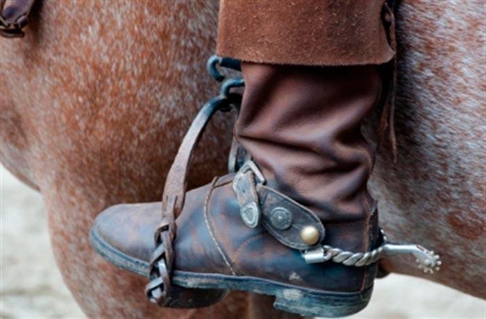 Амуниция для лошади – собираем комплект. полный список