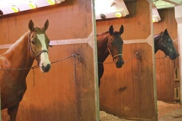 Строим конюшню для лошадей самостоятельно