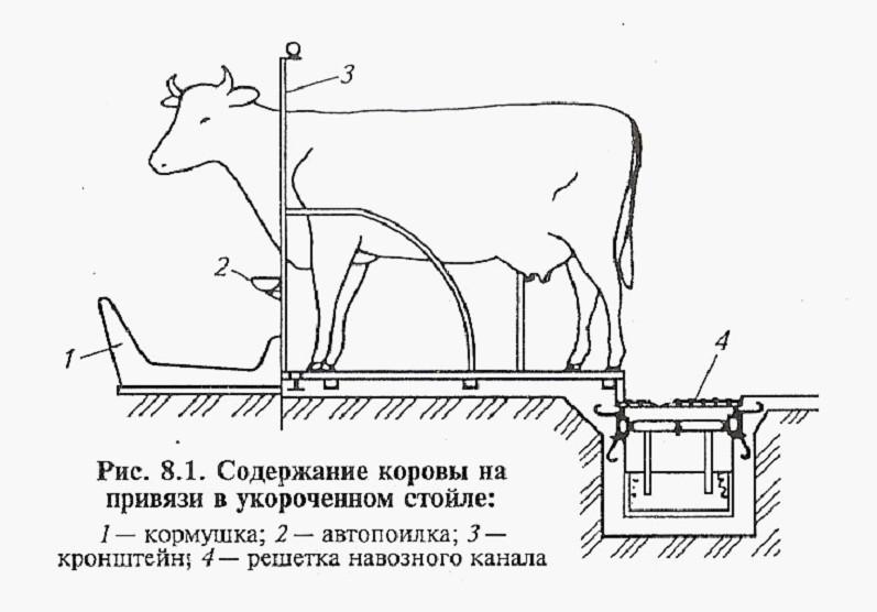 Поилки для крупного рогатого скота: автопоилки с подогревом для коров и телят. как сделать поилку для скота своими руками? групповые и уровневые поилки для коров