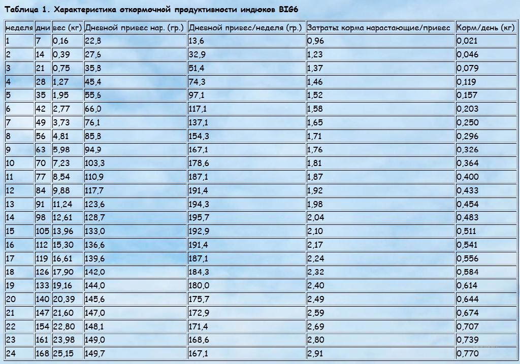 Индюки хайбрид конвертер (32 фото): описание породы тяжелого кросса. чем лучше белых широкогрудых индеек? разведение и выращивание индюшат в домашних условиях, отзывы