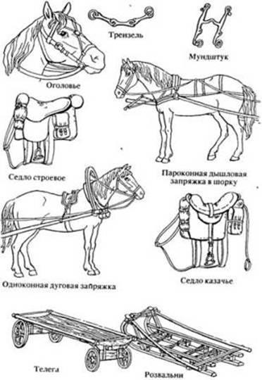 Как правильно запрячь лошадь в телегу: советы и видео