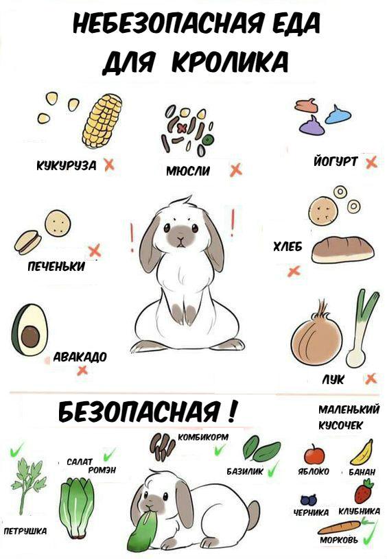 Какое сено лучше для кроликов: сколько сена съедает кролик в день