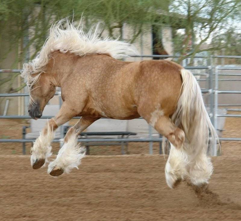 Самые прекрасные лошади мира: кто они?