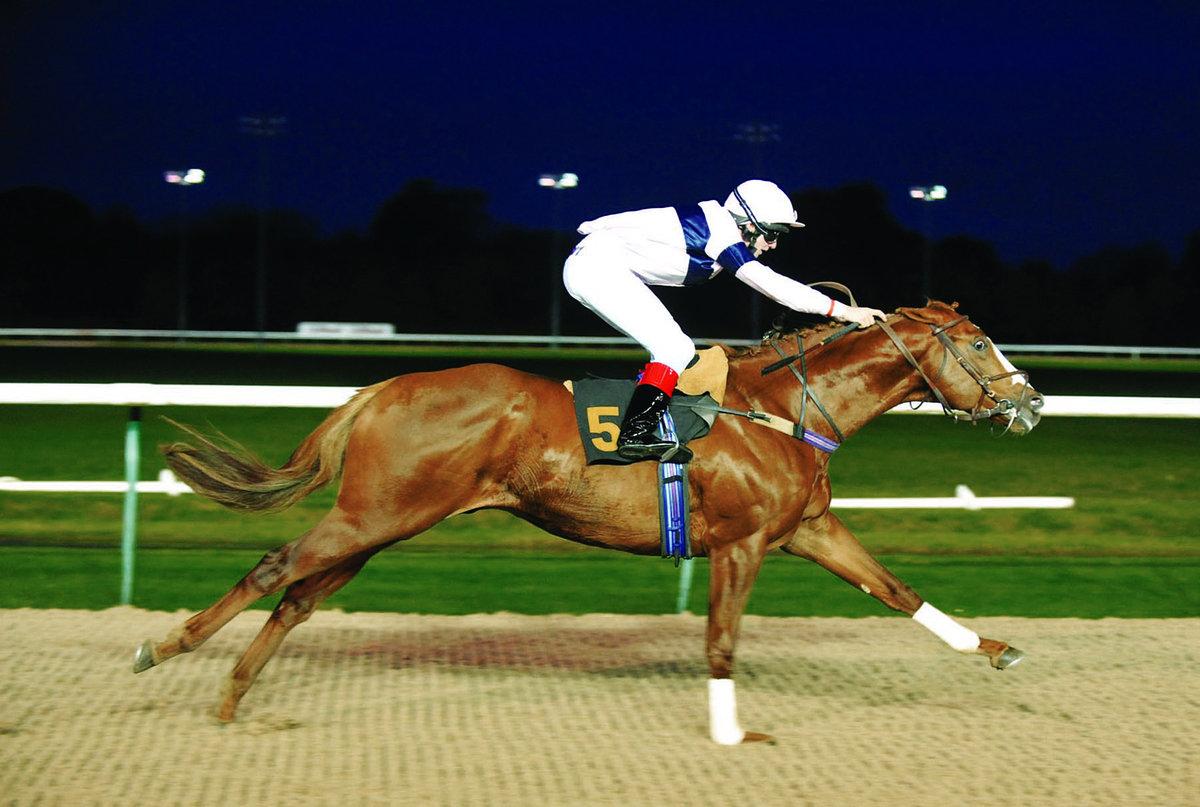Скорость лошади в км/ч: средняя, максимальная