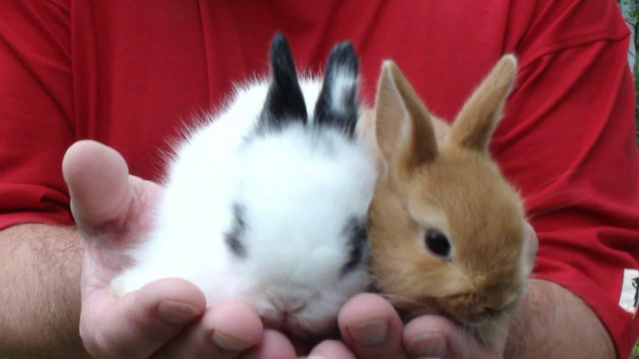✅ о маточнике для кроликов: как сделать своими руками, размеры и чертежи - tehnomir32.ru
