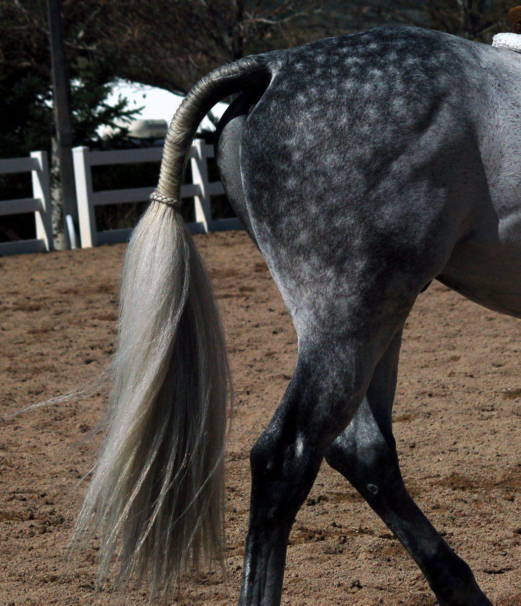 О хвосте и гриве лошади: особенности ухода за конским хвостом и гривой