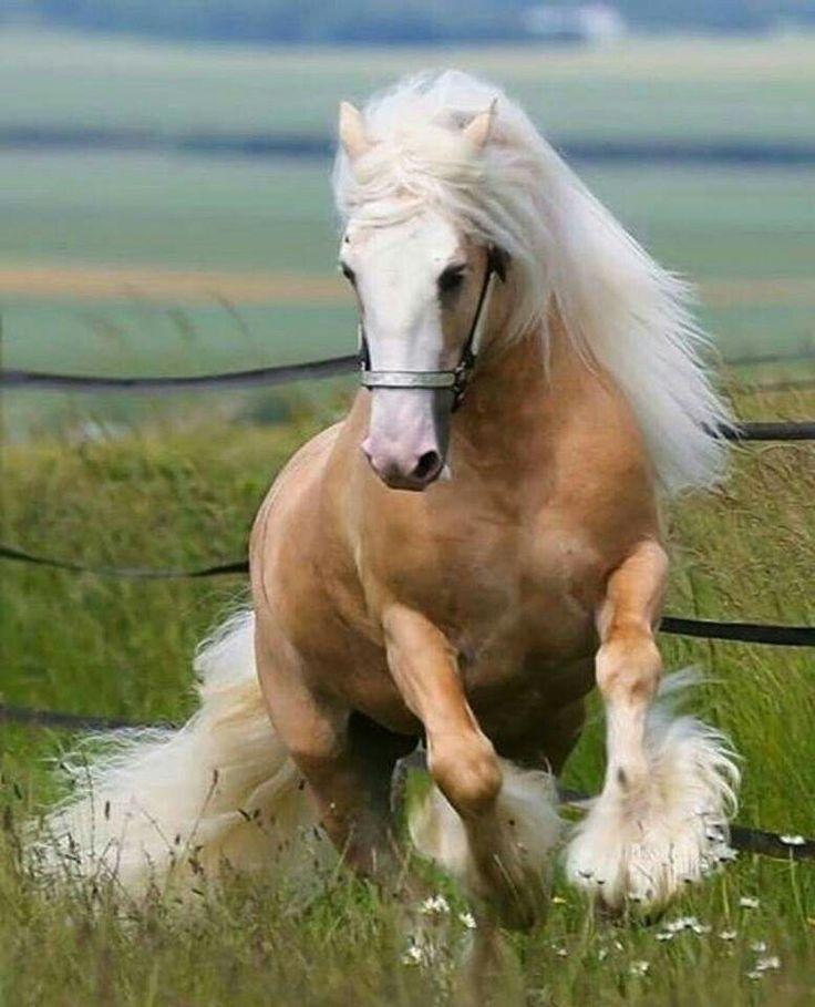 ✅ о красивых лошадях: обзор самых прекрасных лошадиных пород в мире - tehnomir32.ru