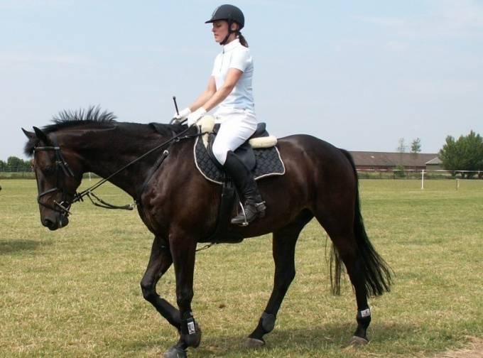 Как обучить лошадь в домашних условиях - ogorod.guru