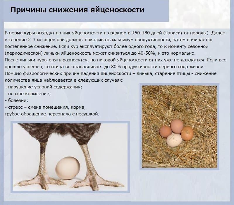 Почему куры несут яйца без скорлупы? основные причины